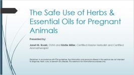 The Safe Use of Herbs & EO for Pregnant Animals pic