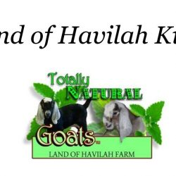Land of Havilah Kits!