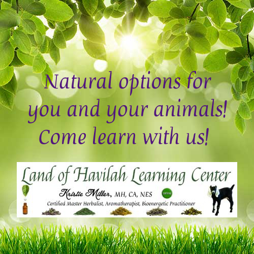 Our Brand New Land of Havilah Learning Center – Membership Website!