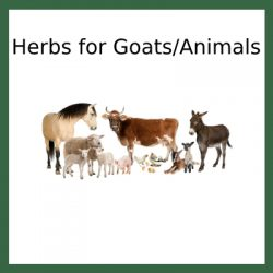 Herbs for Goats/Animals