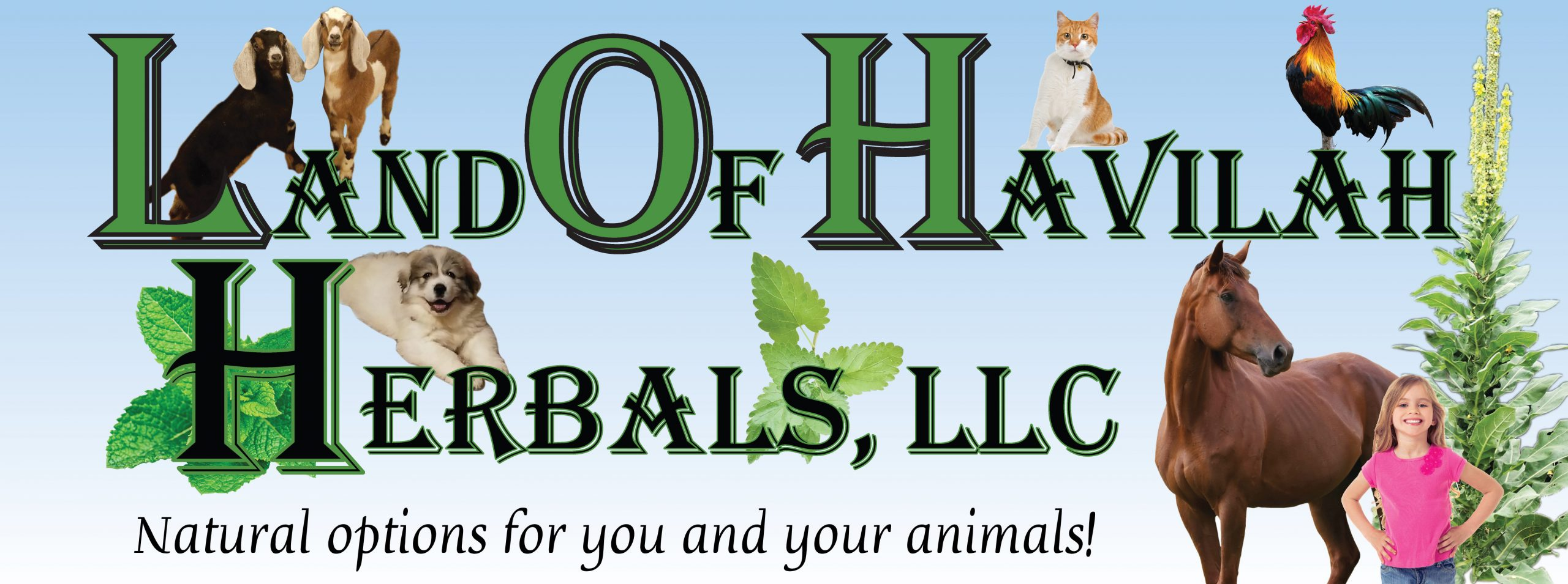 Land of Havilah Herbals & Farm